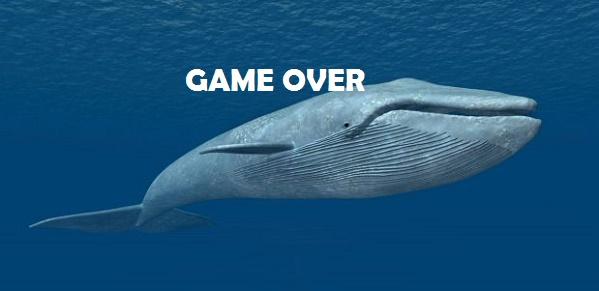 blue-whale-2